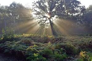 Norton Disney Big Wood Natural Burial Ground, Lincolnshire