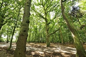 Golden Valley Woodland Burial Ground, Alfreton, Derbyshire