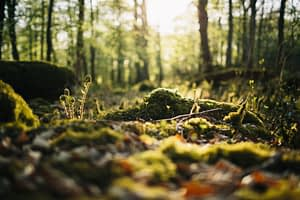 Dalton Woodland Burial Ground, Natural Burial Ground, Burton-in-Kendal, Cumbria